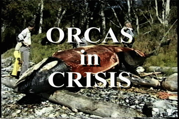 Orcas in Crisis
