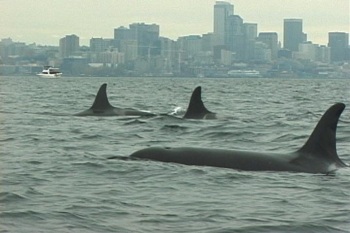 Urban Whales